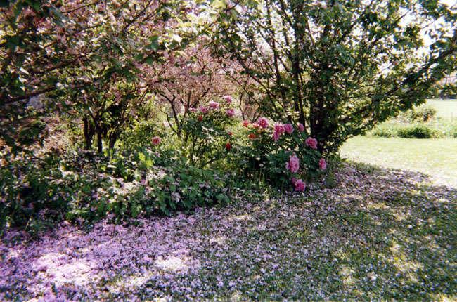 Giardini di fiori isabella casali di monticelli - Giardini e fiori ...
